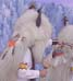 White Buffalo Dancers - Michele Y. Tapia-Browning